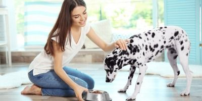 6 Dog Breeds Not Recommended for Keeping
